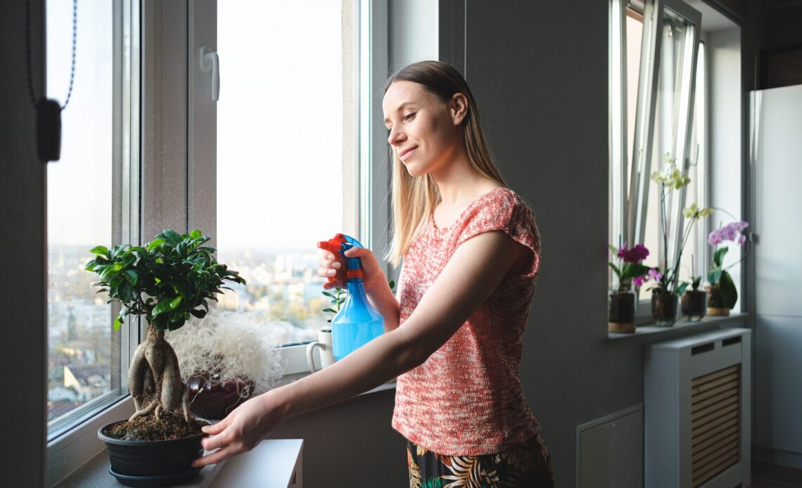 woman watering a bonsai tree in the apartment